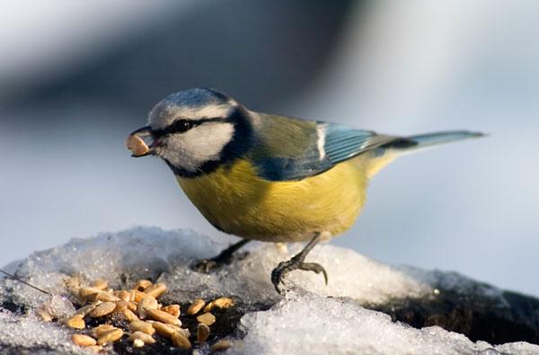 rare-birds-photo-14