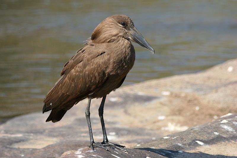 rare-birds-photo-2