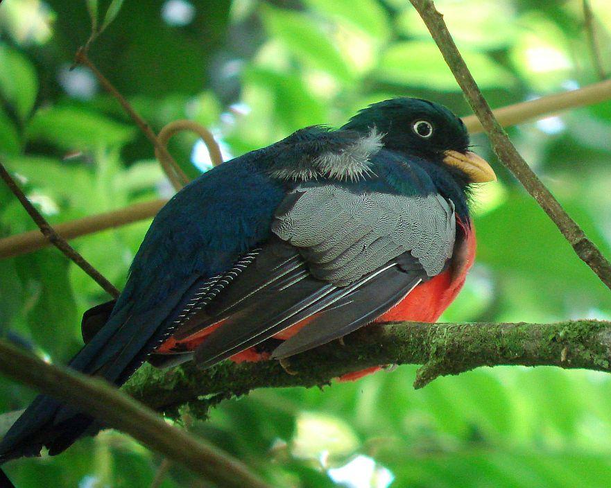 rare-birds-photo-20