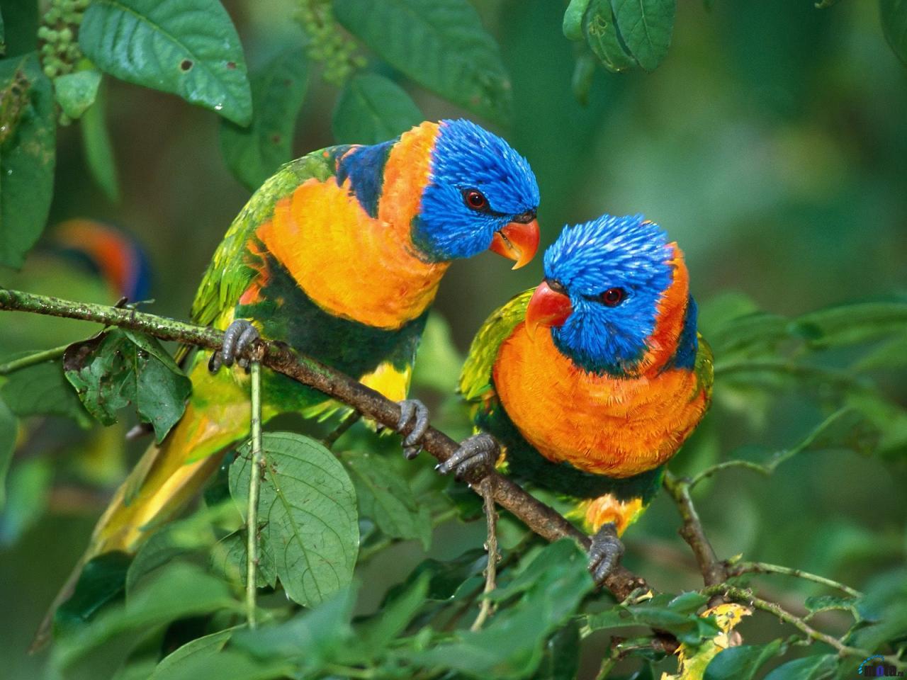rare-birds-photo-21