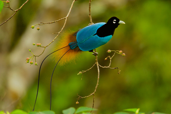 rare-birds-photo-22