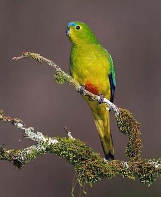 rare-birds-photo-24