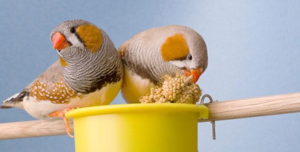 rare-birds-photo-25