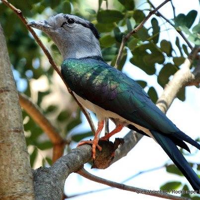 rare-birds-photo-28