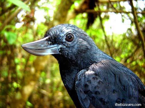 rare-birds-photo-29