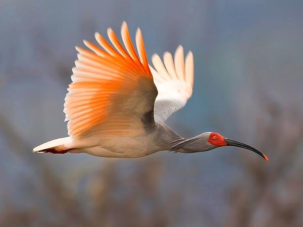 rare-birds-photo-31