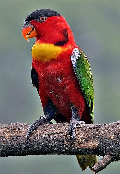 rare-birds-photo-6