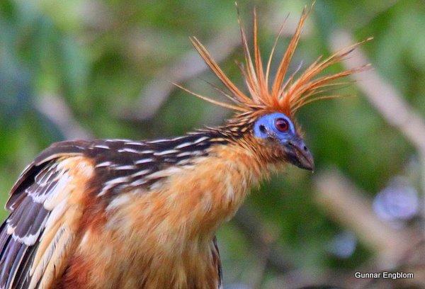 rare-birds-photo-7